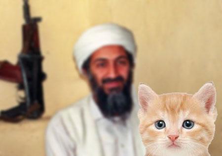 Kitten!!